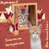 ~~~~~~> Du jour au lendemain, débarquent 2 petits chatons. ♥