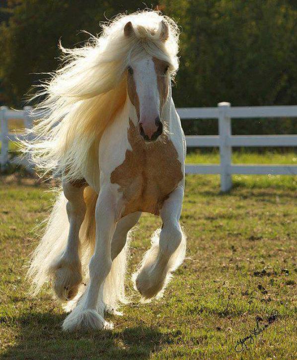 le plus belle animal sur terre