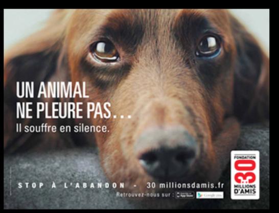 Blog de aspa45 page 5 association de sauvetage pour les animaux - Porter plainte pour abandon de famille ...