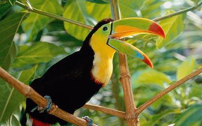 """Résultat de recherche d'images pour """"animaux jungle amazonienne"""""""