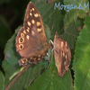 .: Papillons :.