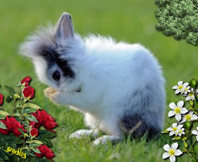 Un lapin trop mignon nos amis - Photo de lapin mignon ...