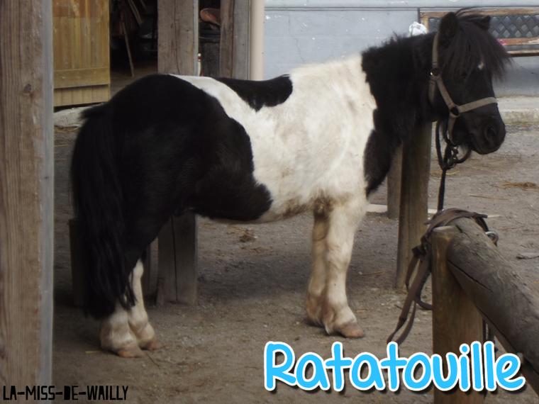 ♠ Ratatouille & Mascotte ♣