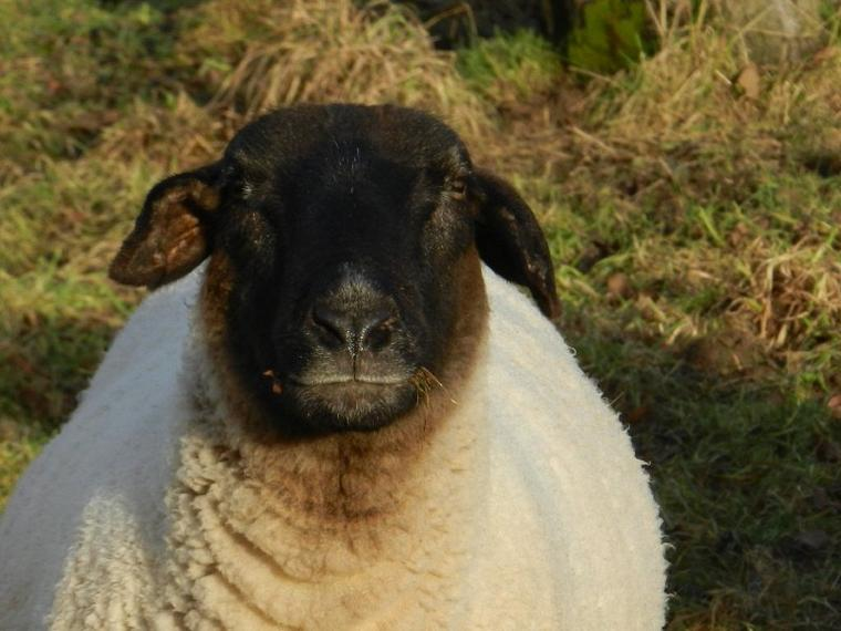 714    Mouton