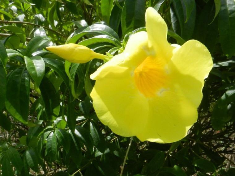 720  Fleurs de Martinique