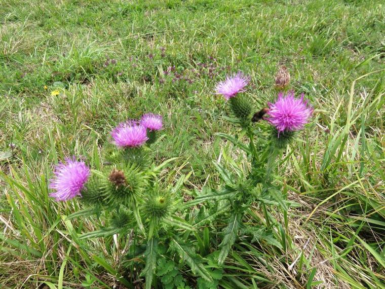 1136  Fleurs d'automne...1