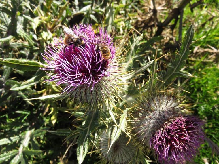 1137  Fleurs d'automne...2