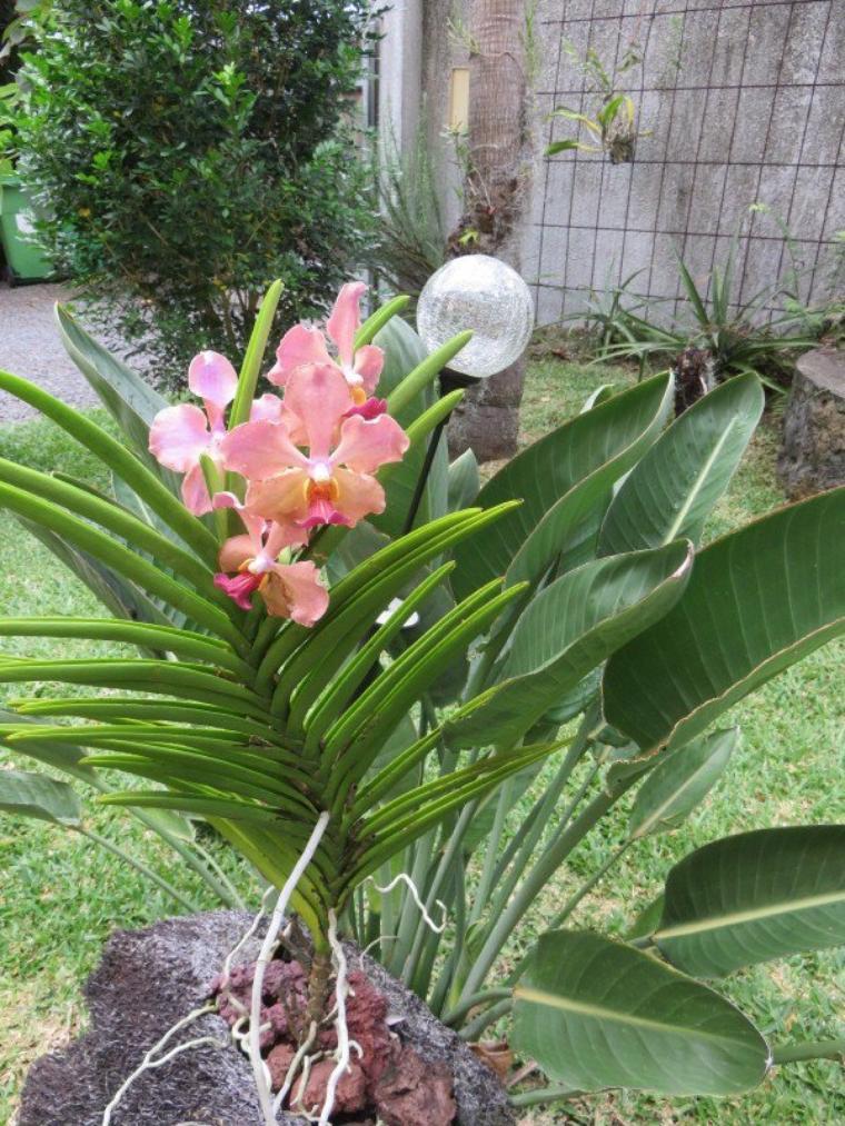 1200  Fleurs de la Réunion