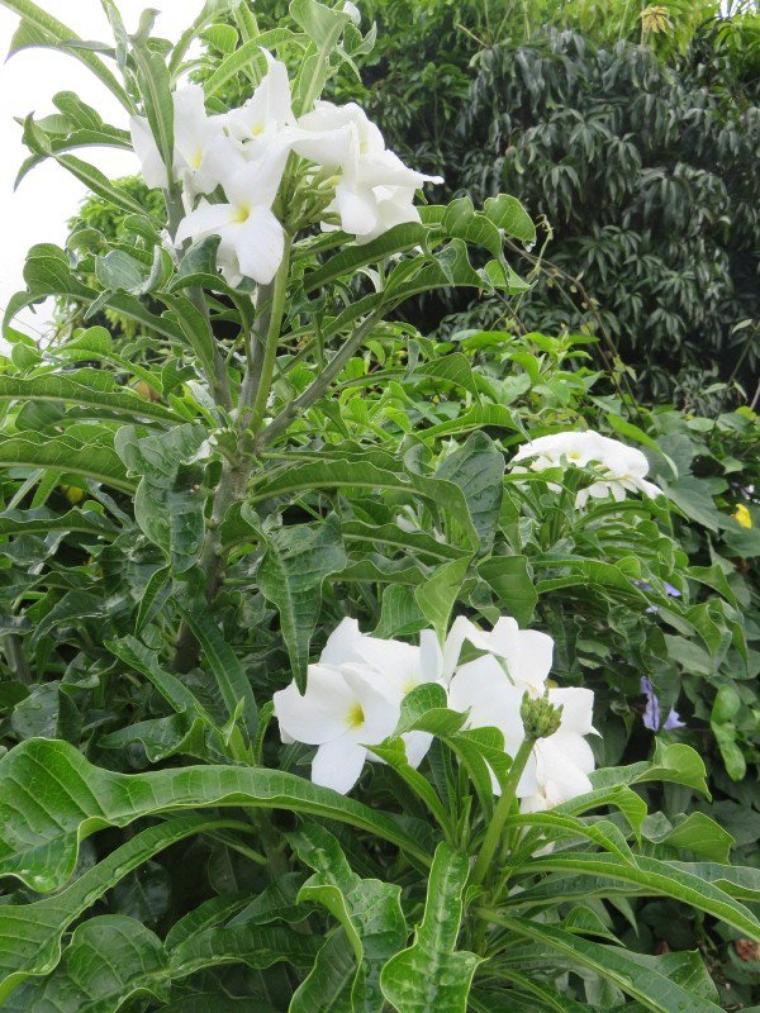 1201  Fleurs