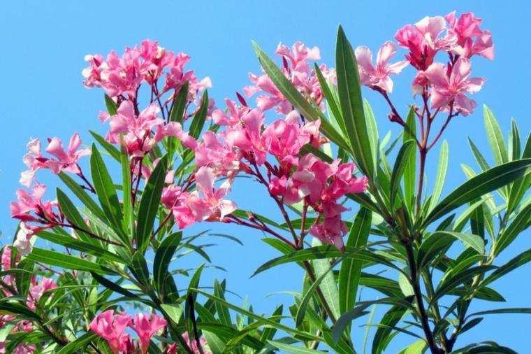 Liste des principales fleurs toxiques