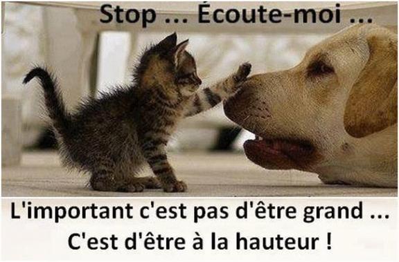 Articles De Filou187 Tagges J Aime Quand Les Animaux Parlent
