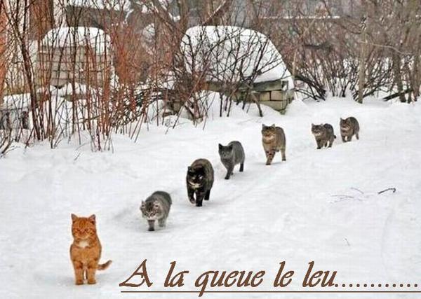 Bonjour Mercredi ...Bonjour à toi qui vient nous rendre visite......