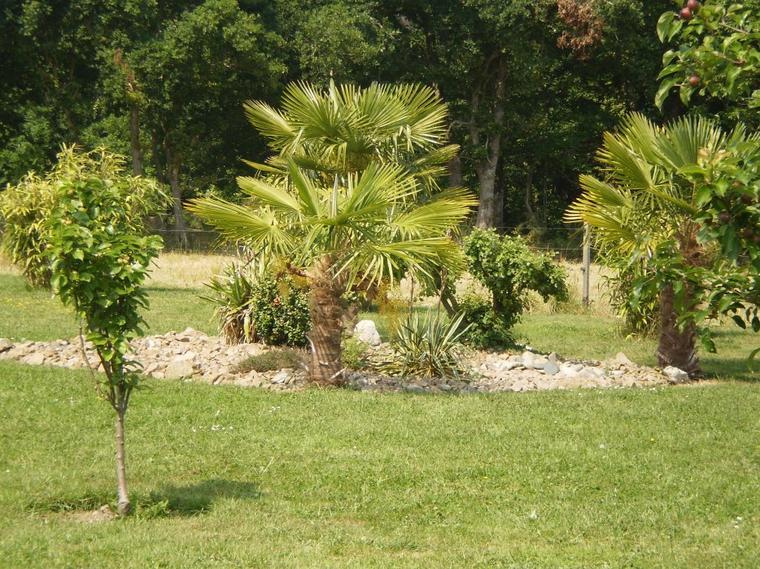 Suite du jardin de berthe melanie for Au jardin avec melanie gregoire