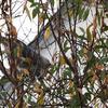 mon chat coince dans l'arbre
