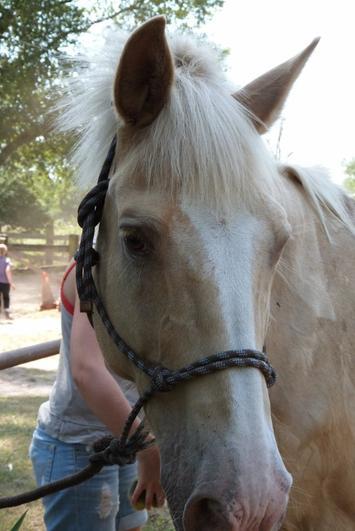 « Le cheval court, le cavalier se vante. »