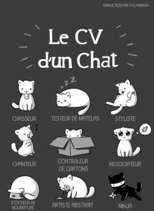 Petite histoire de chat bonne soir e et bon mardi bisous flo blog de florence094 - Dessin chat rigolo ...
