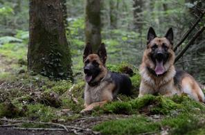 Eïdhen et Ghawenn - Balade dans la Forêt
