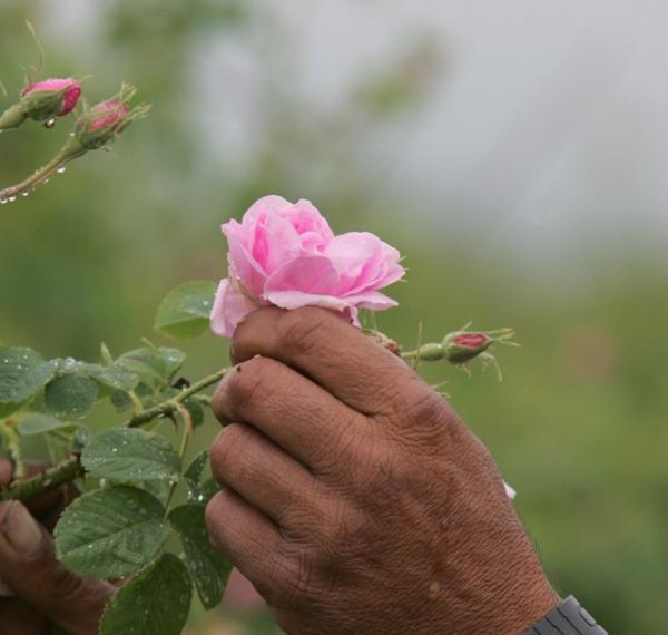 En ce temps-là j'aimais les roses (Chanson)