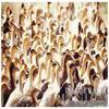Sujet n°1 : Le gavage des oies/canards - Production mondiale