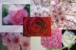 Forêt de Roses