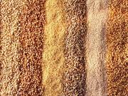 A Peek At Grain Insurance