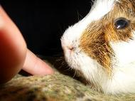 Kiko avec mon doigt !!!