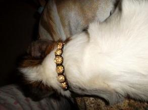"""Son """"collier"""" à kiko"""