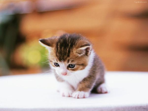 Petit chat tout mignon..♥