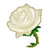 cette fleur pour l'amitiès