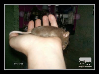 Namy dans ma main & évolution de Birdy