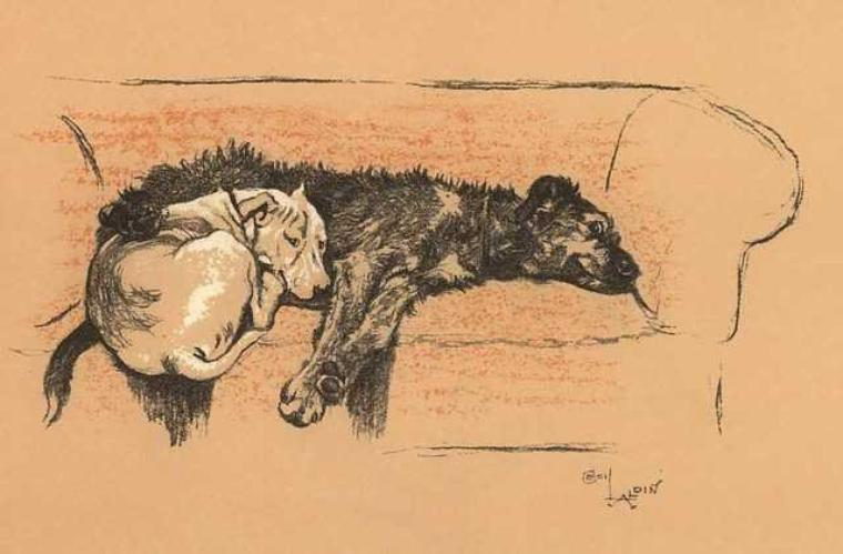 Cecil  ALDIN (1870-1935)   :   life and sleeping partners