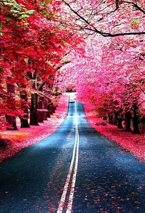 """""""La normalité est une route pavée, on y marche aisément mais les fleurs n'y poussent pas."""""""