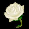 la fleur blanc sais pour le marage