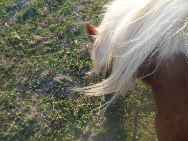 « Le cheval porte son cavalier avec vigueur et rapidité. Mais c'est le cavalier qui conduit le cheval. Le talent conduit l'artiste à de hauts sommets avec vigueur et rapidité. Mais c'est l'artiste qui maîtrise son talent. » (tellement de photo♥.)