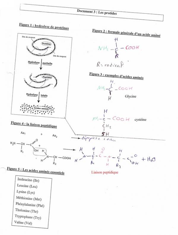 Pôle 2 : Chapitre 6 : Des aliments aux biomolécules