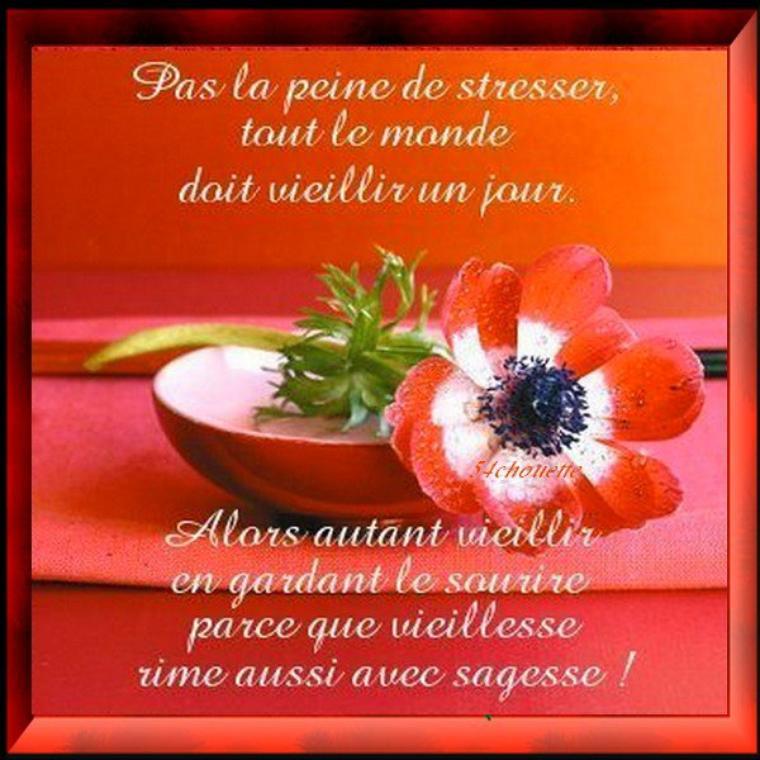 ✿♥♥✿  BONJOUR LES AMI(E)S MERCI DE VOS  VISITES    ✿♥♥✿