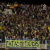 fatal.tigers