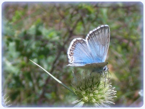 Jolis papillons,