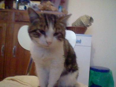 Hommage au petit chat Léo ❤