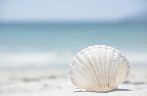 • quand j'étais petite, je cherchais le plus beau coquillage parmi des milliers de grain de sable, maintenant je cherche la perle rare parmi des milliers de connards♥