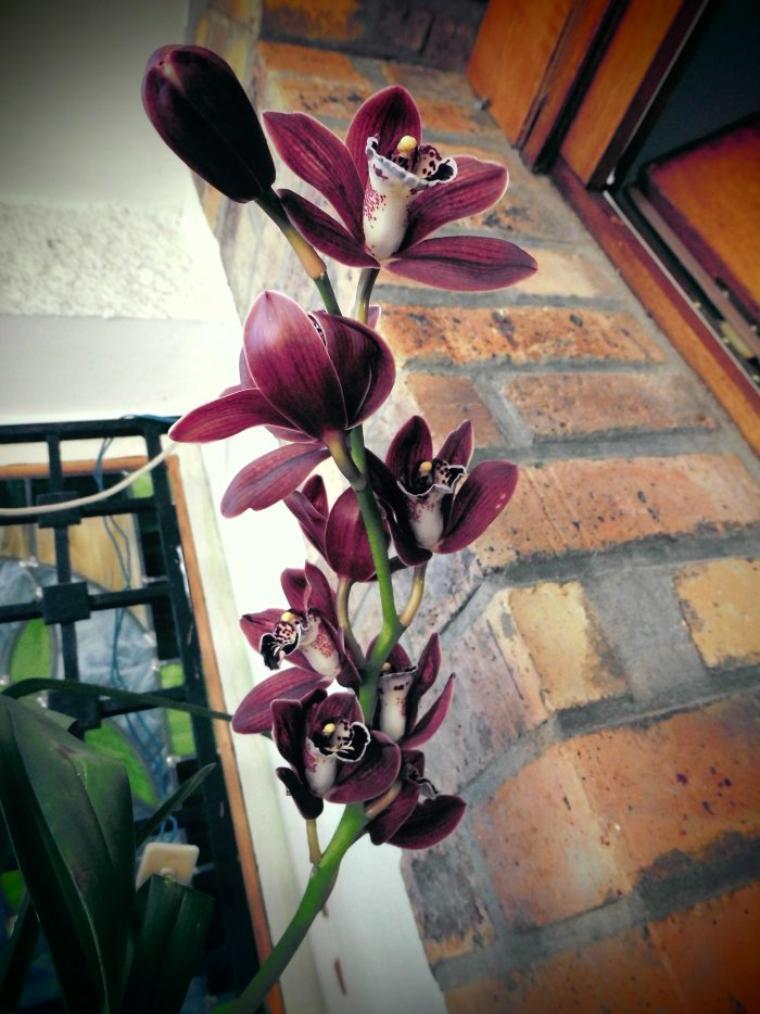 Orchidées : mon autre passion