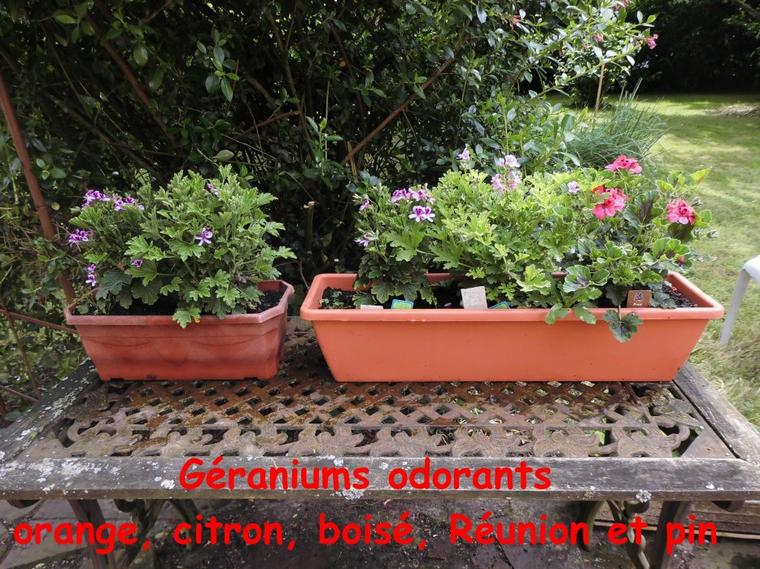 Paroles de jardinier: 3è édition dans les Yvelines