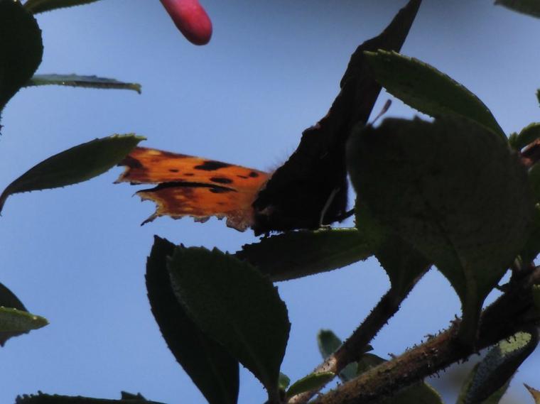 Un des derniers papillons dans le soleil