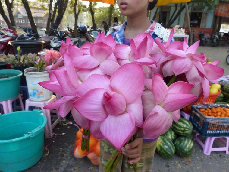 Myanmar 6 : Marché : le lotus dans tous ses états.