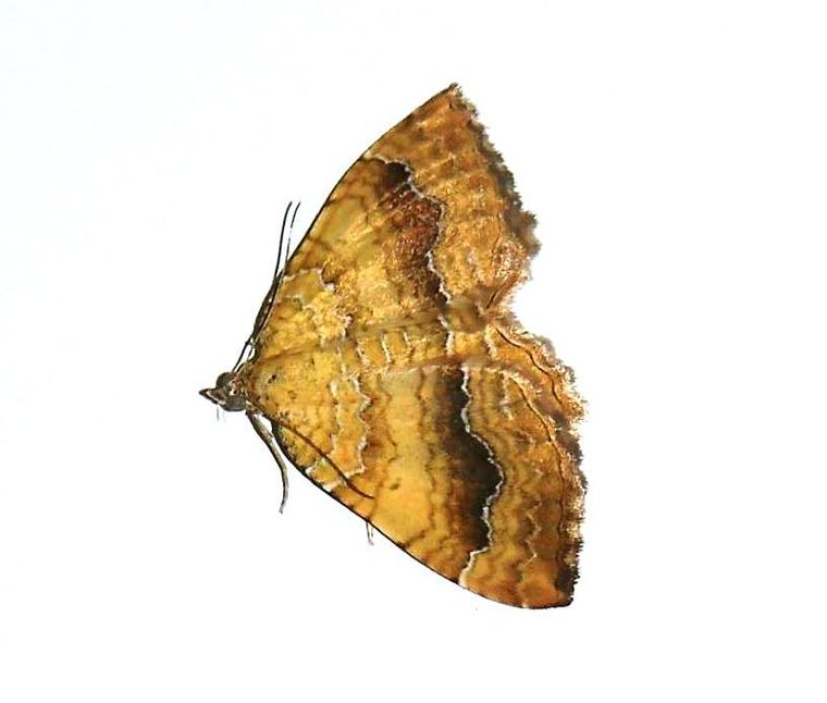 Papillon d'aujourd'hui