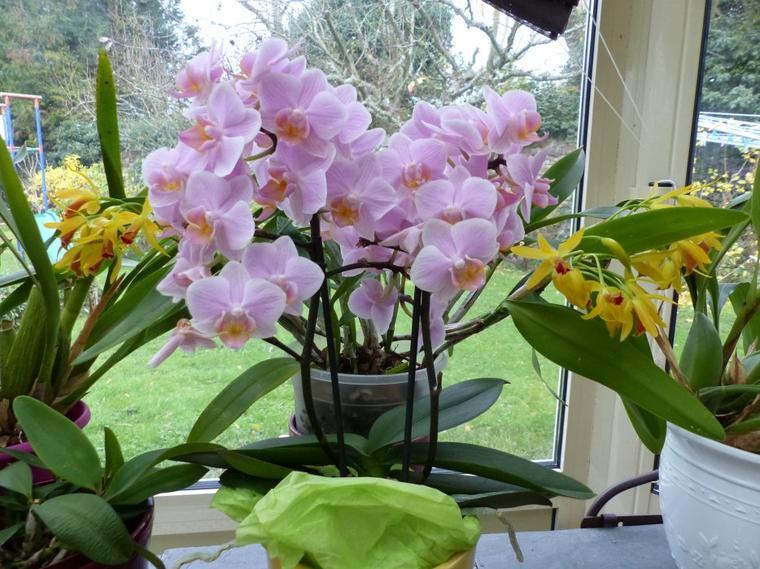 Orchidées du moment