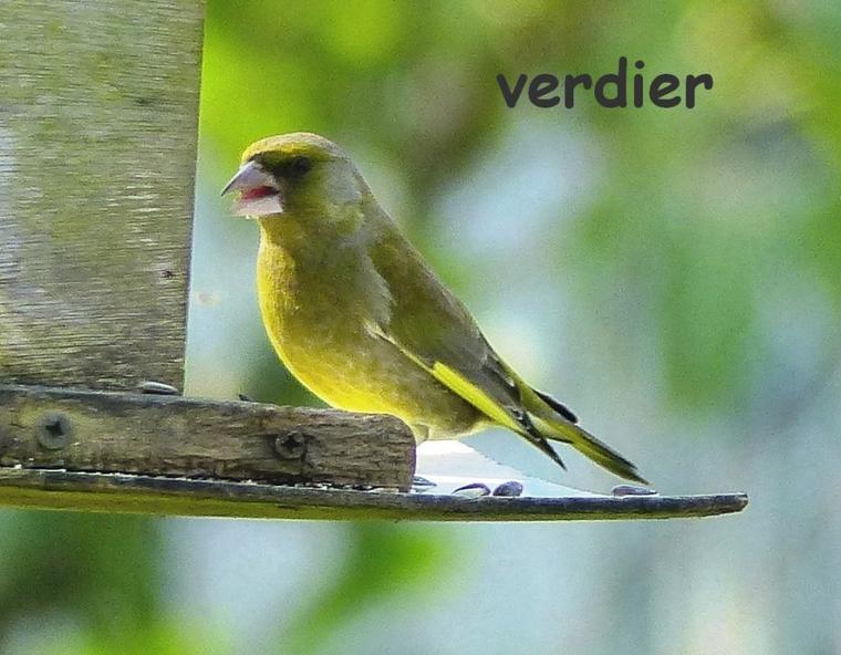 Les oiseaux du printemps