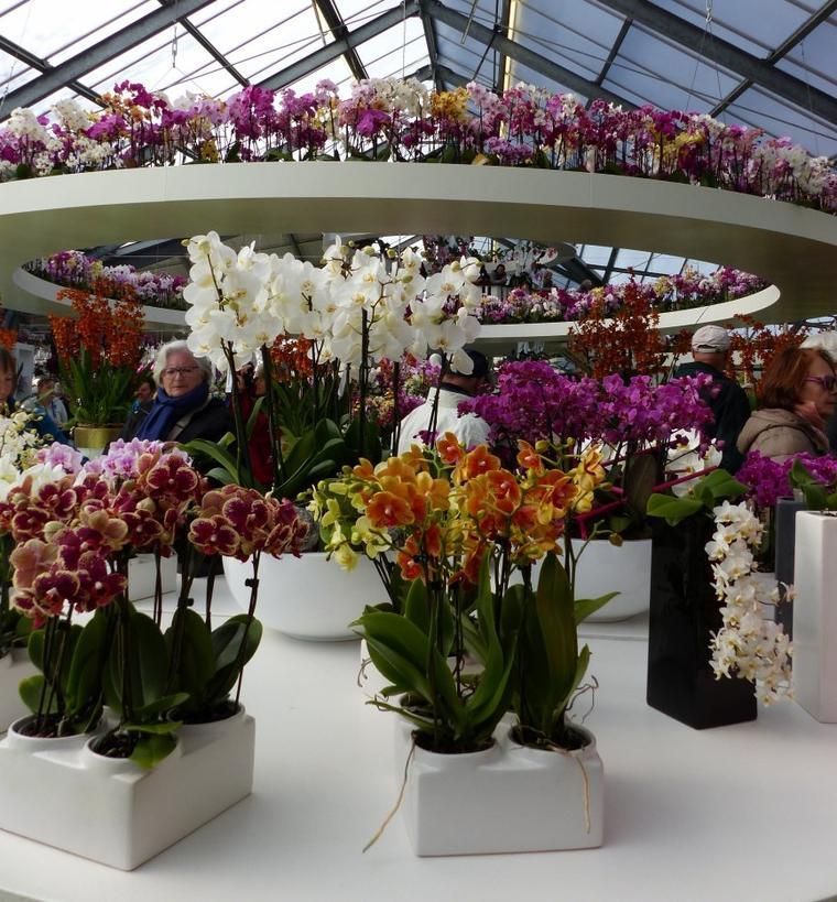 Hollande : Keukenhof : la serre d'orchidées