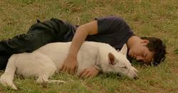 Film : Japonais  Dog & Police: The K-9 Force 104 minutes   [Action et Policier]