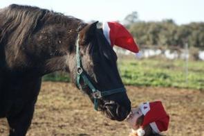 Joyeux Noel !! <3
